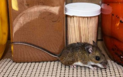 Are You Ready for Fall and Winter Pests?