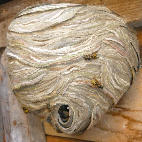 Ladybug Pest Control Services