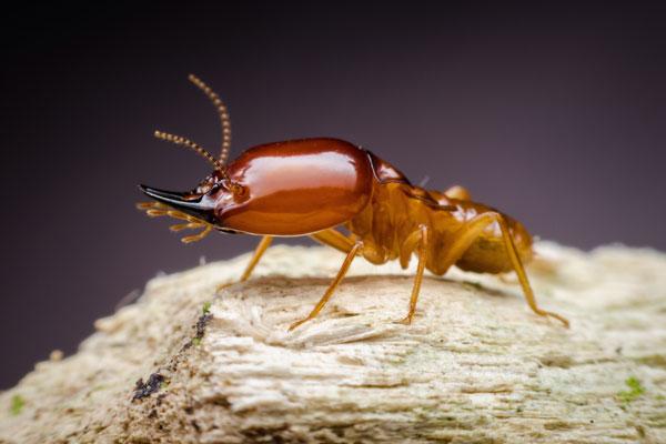 Termite Season is upon us!